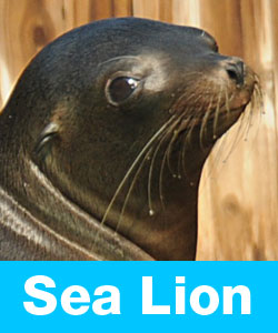 Learn about sea lions.