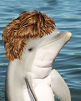 Find out if dolphins have hair.