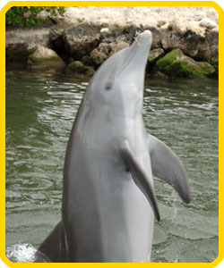 Visit Dolphin Research Center in the Florida Keys.
