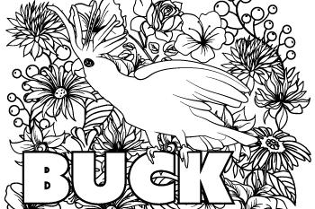 Drawing of Buck