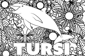 Tursi drawing