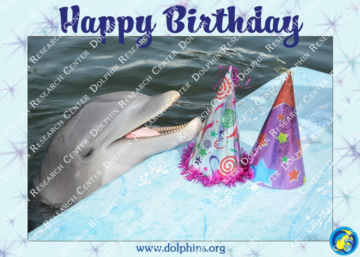 Greeting cards dolphin research center happy birthday greeting card preview m4hsunfo