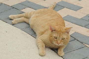 Sebastian is a sweet cat who loves to roll around on the walkway.