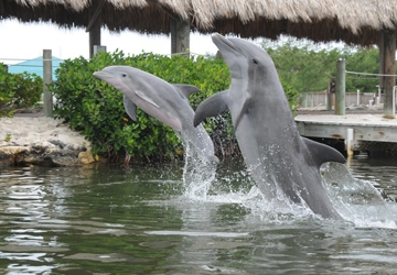 Diva shows off with her mom, Aleta, in a swim with the dolphin progra