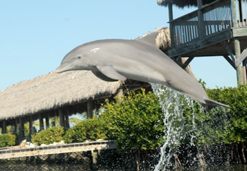 Check out Calusa's front dive.