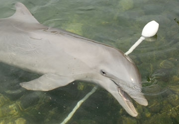 our animal family dolphin research center photo gallery