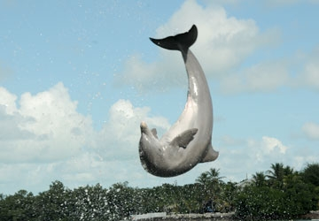 A Flipper grandson, Pax is very athletic.