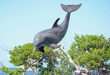 elegante nello stile bene fuori x raccolto Our Animal Family - Dolphin Research Center