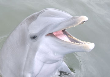 Santini is one of the smartest bottlenose dolphins we know!
