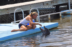 Get to know our animal family at Dolphin Research Center.
