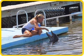 Our DolphinLab students get to work firsthand with our dolphin family members.