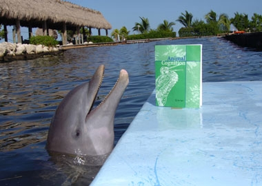 Tanner investigates the scientific journal Animal Cognition, where DRC published our findings about what dolphins understand about hidden objects.