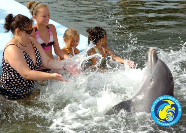 A family wading with a splashing dolphin