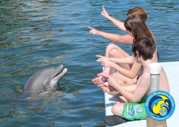 Guest on a dock, signalling to a dolphin