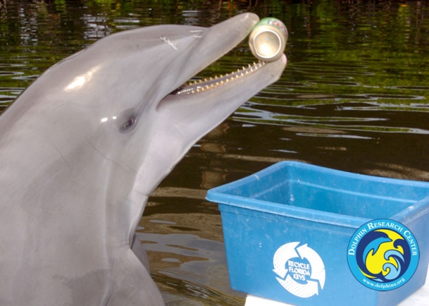 A dolphin putting a can in a recycling bin