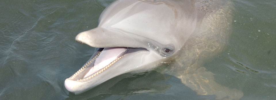 Dolphin Anatomy - Dolphin Research Center