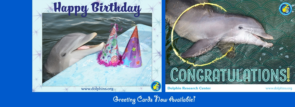 Image for Slide: Happy Birthday & Congratulations