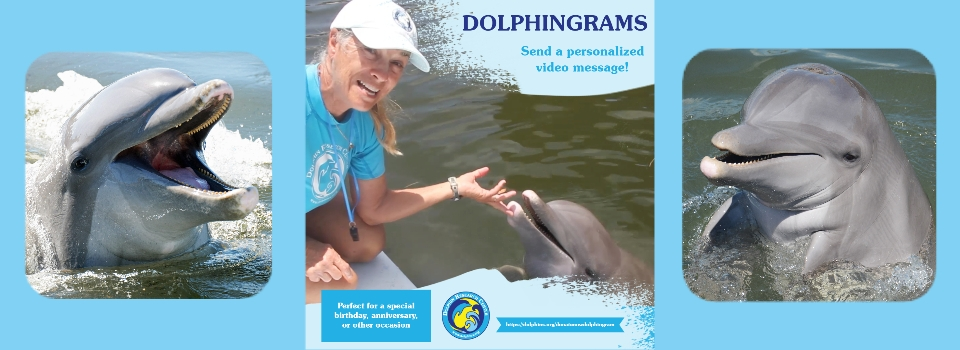 Get a personalized video DolphinGram as a gift for your donation of $