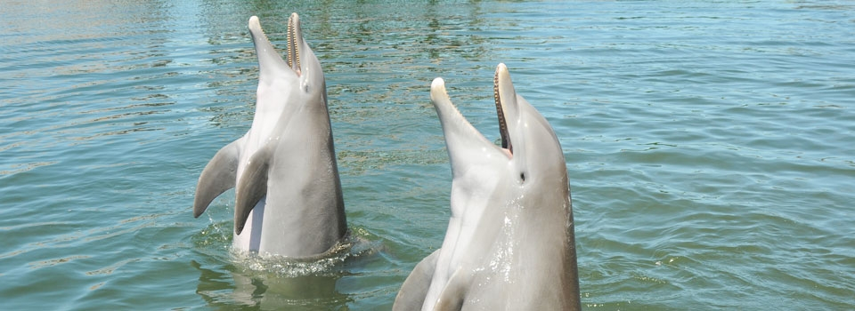 Kids Dolphin Facts - Dolphin Research Center