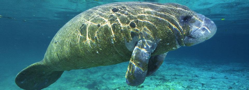 Jellyfish A Natural History Amazon