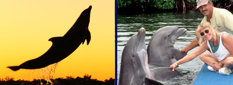 Dolphin Research Center was founded as a nonprofit corporation in 198