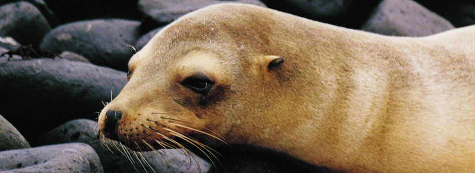 Research sea animals