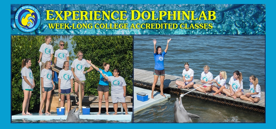 Experience DolphinLab at DRC.