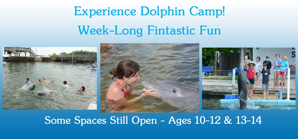 Kids have a wonderful time at DRC's Dolphin Camp.