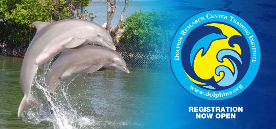 Two dolphins leaping out of the water with the DRC logo superimposed