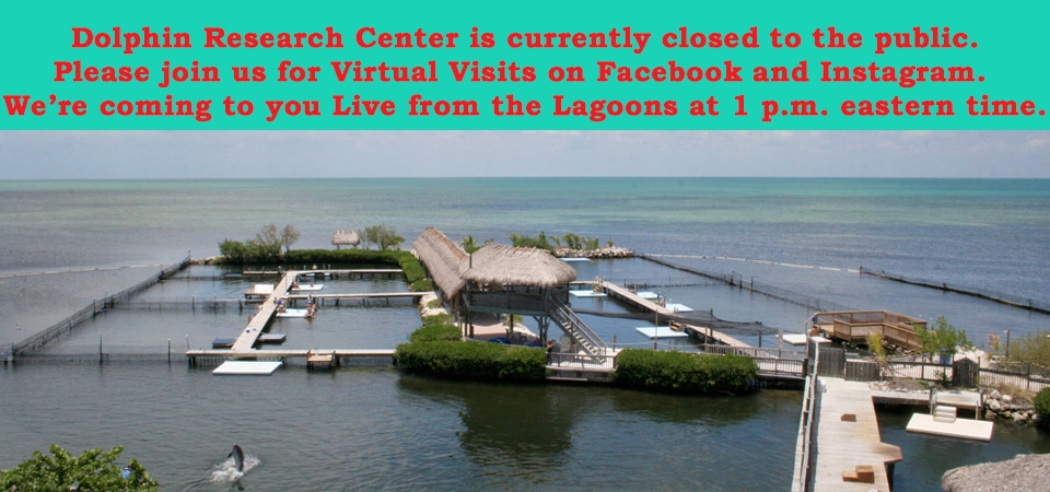 DRC is closed but please check in with us on our Facebook and Instagr