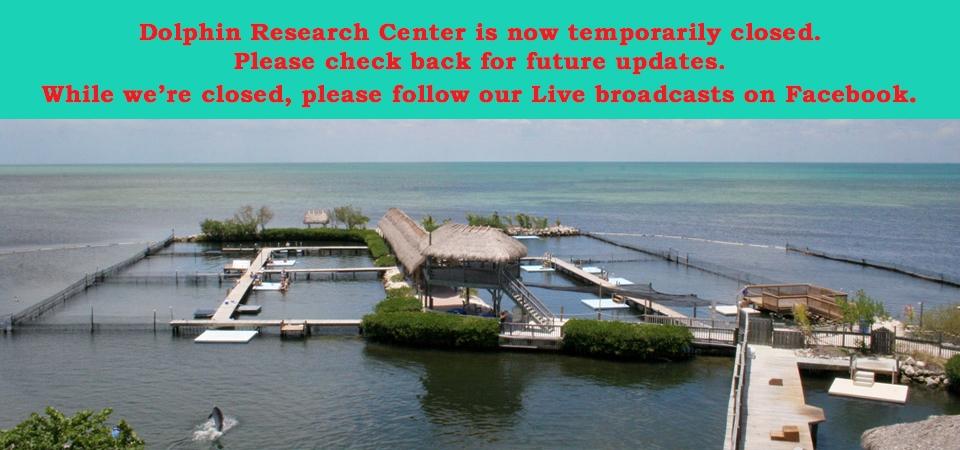 While DRC is closed, please visit us on Facebook.