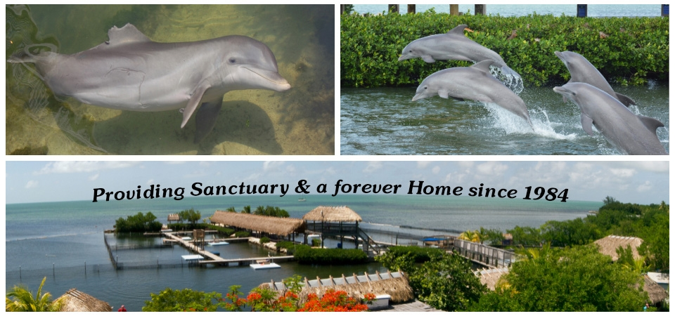 The promise of a forever home for dolphins and sea lions at Dolphin R