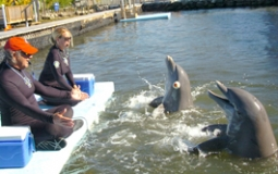 DRC's Blindfolded Imitation study showed that dolphins can imitat