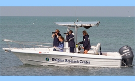 DRC begins a field research project, studying the wild bottlenose dol