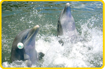 The dolphins enjoy playing thinking games.