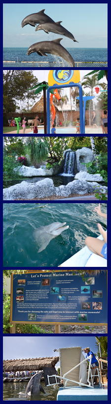 Swim with dolphins or just spend the day at Dolphin Research Center