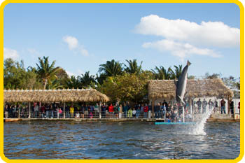 Your group will love meeting our dolphin family in the Florida Keys
