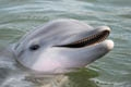 Stop by Dolphin Research Center in the Florida Keys and meet Cacica!