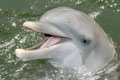 Stop by Dolphin Research Center in the Florida Keys to meet Tanner.