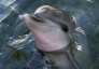 Meet Summer, and her bottlenose dolphin pals, in the fabulous Florida