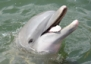 Stop by Dolphin Research Center in the Florida Keys and meet Reese!
