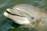 Sandy is a very handsome bottlenose dolphin. Come visit him and his f