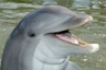 Say hello to Talon, the bottlenose dolphin.