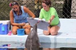 Two trainers on the dock working with a dolphin (Quicklink Detail Item)