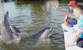 Guests signalling to dolphins in the water (Quicklink Item)