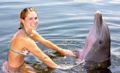 Woman wading with dolphin (Quicklink Item)