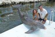 Guest feeding a dolphin from the dock (Program Image)