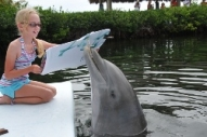 A dolphin painting with a brush in its mouth. (Program Image)