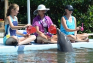 Trainers on the dock with a dolphin in the water (Program Image)