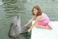 Young guest holding a dolphin's flippers from the dock